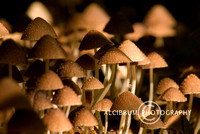 A Bunch of Mushroom, Tangkoko National Park, North Sulawesi, Ind