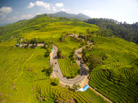 Interesting landscape of tea plantation