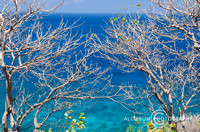 Dry Bare Tree Branch with Beautiful Crystal Blue Seawater on bac