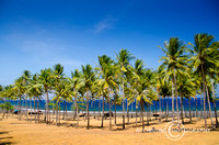 Beautiful Row of Coconut Trees on The Beach, Lombok