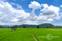 The beauty of Green Paddy Field With Dramatic Blue Sky and Cloud
