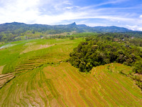Paddy rice field of Kawi Lega, Jonggol from the air