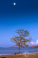 Lonely Tree and the moon on The Tropical Beach, Gili Asahan, Lom