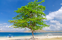 Man, Tree and Jukung Boat on The Tropical Beach, Gili Asahan, Lo