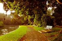 A footpath and a bench in a beautiful morning, Bogor Botanical Garden, Indonesia