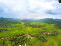 Paddy field from above