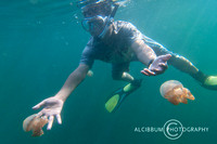 Snorkeling With Stingless Jellyfish at Togean Island, Indonesia